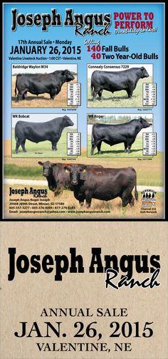 Joseph Angus Ranch - 17th Annual Sale - Jan 26, 2015
