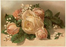 How Flower-Obsessed Victorians Encoded Messages in Bouquets - Atlas Obscura Victorian Illustration, Botanical Illustration, Victorian Flowers, Vintage Flowers, Victorian Era, Antique Roses, Tea Roses, Pink Roses, Language Of Flowers