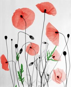Arie van't Riet's Colorized X-rays Emphasize Natural Beauty