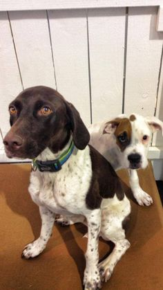 If you've seen a cuter picture, please send it over. These two were doggy day care glamour shot finalists, Belle and Roxie, bonding at HHP near Reston, VA. www.HealthyHoundPlayground.com