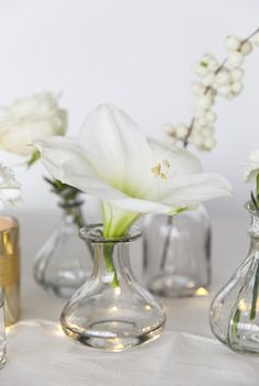 Vakker hvit amaryllis.