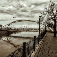 Bridge & Bird