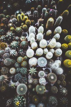 warfashion - elenamorelli:   { cacti love! }