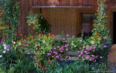Motive finden - Conrad Amber Plants, Nature, Flowers, Plant, Planets