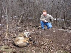 Look at the terror and agony on this innocent wolf's face while caught in a steel jaw leg hold trap compared to the oxygen wasting human in the background with a smile on his face...  Absolutely horridly inexcusable...    Please sign and share petition against killing contests that use similar methods of trapping.     http://wolfarmy.net/petition/ban-animal-killing-contests/