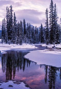 renamonkalou: Winter's Spring | Canadian Rockies | Vicki Mar