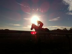Capturing the beauty of horses training early morning