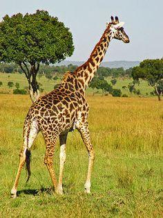 これが地上最強の動物たちだ! 最強動物のまとめ - NAVER まとめ