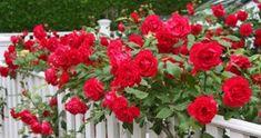 Йод и молоко прогнали тлю с моих роз Floral Wreath, Plants, Garten, Planters, Wreaths, Plant, Planting, Flower Band, Floral Arrangements