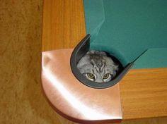 Schon immer vermutet, endlich bewiesen: Katzen können KungFu!