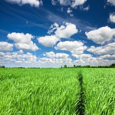 idea for mom's painting...like the puffy clouds, blue sky, and green grass