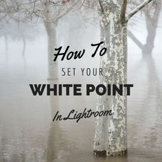 We've got a quick editing tip for those of you using Lightroom! http://captureyour365.com/how-to-set-a-white-point-in-lightroom/