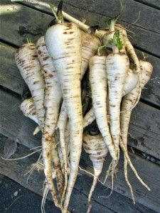 How to Grow Parsnips