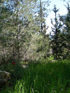 Spring 2015 - Tzora Forest. Israel