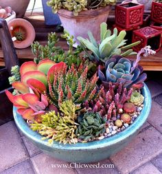 succulent-arrangement-by-chicweed. I love succulents and they'll work well in this environment-Dnb