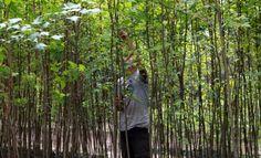El verbo «reforestar» significa 'repoblar un terreno con plantas forestales'…