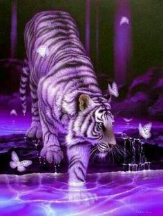 I love tigers, this is beautiful use of colors! Gorgeous picture!