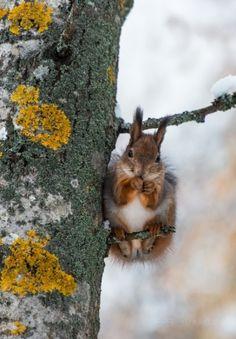 Season | Winter ✿⊱╮ by Pikssik