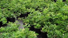 How To Over Winter Perennials Grown In the Rain Gutter Grow System! Bucket Gardening, Container Gardening, Gardening Tips, Patio Planters, Bottle Garden, Self Watering, Lawn And Garden, Growing Vegetables, Hydroponics
