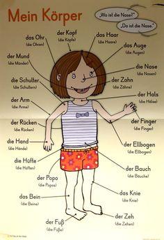 Mein Körper - il mio corpo in tedesco Study German, German English, German Grammar, German Words, German Resources, Deutsch Language, Germany Language, Kindergarten Portfolio, German Language Learning