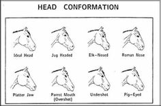 differences in horses heads | horse blemishes of a horse diseases of a horse