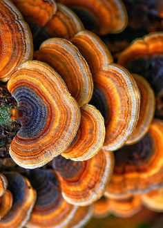 Gorgeous fungi...possibly False Turkey tail or maybe Trametes versicolor?