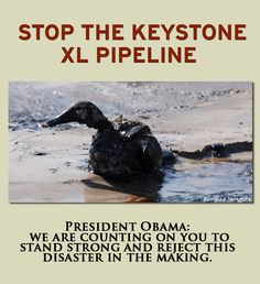 Thousands on Facebook shared this image with their friends, urging President Obama to protect wildlife against Big Oil.