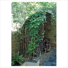 Bicycle shed in city garden