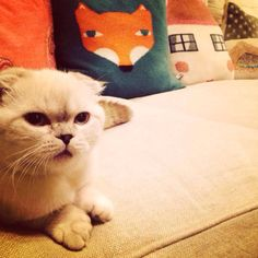 """ingridmichaelson: I call this """"Cat and Fox""""."""
