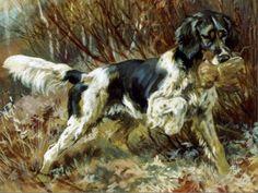 Animal Painter, Gordon Setter, Purebred Dogs, Dog Paintings, Sports Art, King Charles Spaniel, Hunting Dogs, Vintage Artwork, Wildlife Art