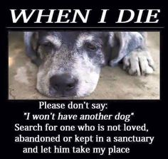 "When I die  Please Don't say; ""I won't have another dog "" Search for one Who is not loved  Abandoned or kept in a sanctuary and let the take my place"