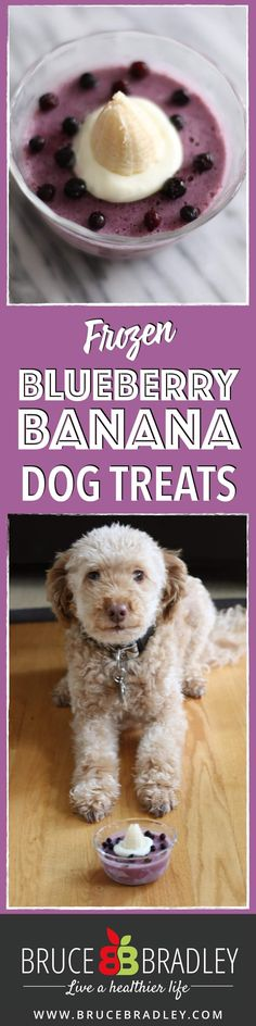 These three ingredient frozen dog treats are the perfect way to celebrate or…