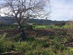 Every garden needs a little zen. Mustards grille Napa valley California