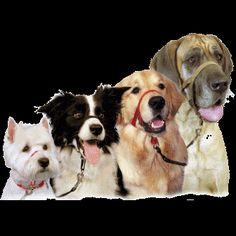 Tipos de Collares Para Adiestramiento de Perros http://www.mascotadomestica.com/adriestramiento-perros/tipos-de-collares-para-adiestramiento-de-perros.html