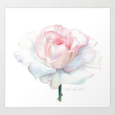 Peace Rose Art Print by ShootsAndBlooms - $30.00