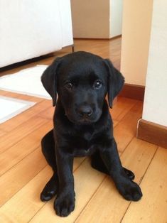 Black Lab puppy ❤️