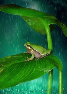 Yağmur Copyright by Blackdiamond