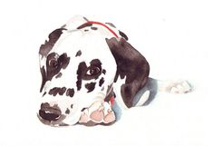Dalmatian Dog Painting   Print of watercolor by Splodgepodge, $15.00. This is a sweet dog.