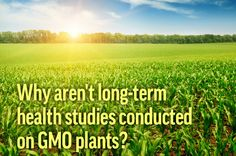 Why aren't long term health studies conducted on GMO plants? They actually are! Find an extensive list of studies at GMOAnswers.com