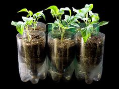 Bottle Hydroponics Systems