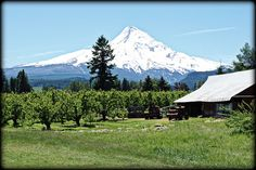 View from Solera Brewery - Parkdale, Oregon, via Flickr.