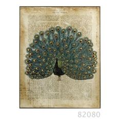 Gorgeous Peacock on Book Page.