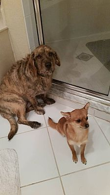 Urgent!- Sunny Isles Beach, FL -Snuggly and Foxy are best friends and are in a bad situation.  The kids are abusing and hurting them  The family doesn't want them in danger and they need a new home immediately.  a Dog for Adoption.