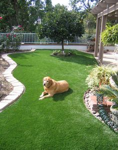 10 Best Ultimate Grass By Easy Turf Ideas Easy Turf Artificial Grass Artificial Turf