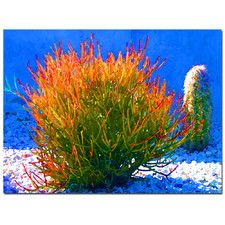 """""""Firesticks on Blue"""" by Amy Vangsgard Photographic Print on Wrapped Canvas"""