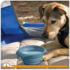Kurgo Collaps-a-Bowl - Portable Pet Travel Bowl Dog Travel Accessories, Collapsible Dog Bowl, Gifts For Dog Owners, Dog Id, Pet Travel, Cool Inventions, Pet Bowls, Pet Store, Best Dogs