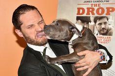 Tapete vermelho tem reencontro animado entre ator e cadela do filme The Drop >> http://glo.bo/1rAOfKW