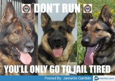 Don't run, police dogs