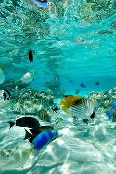 This makes me want to go swimming in the ocean!