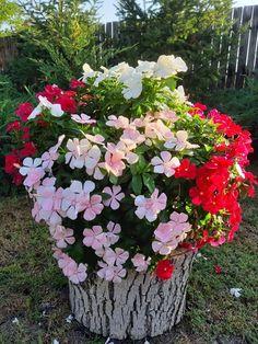 Outdoor, Pots, Gardens, Flowers, Plant, Balcony, Tips, Outdoors, Outdoor Games